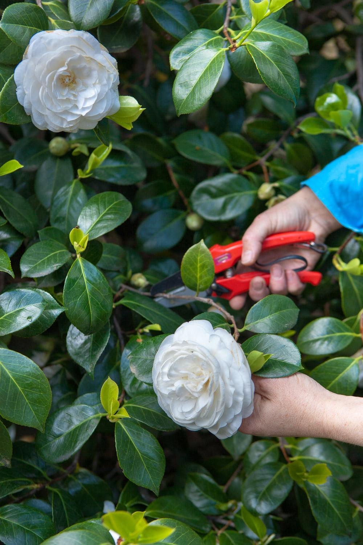 The Home Academy cortando flores