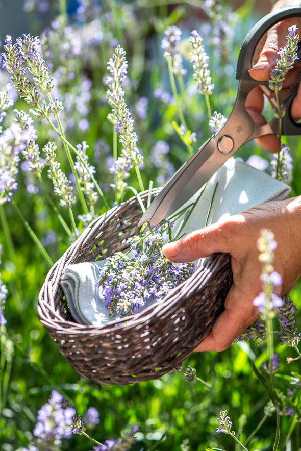 The Home Academy secar flores 4